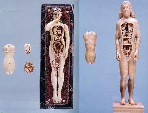 Анатомические манекены