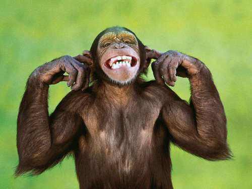 Люди произошли от обезьяны