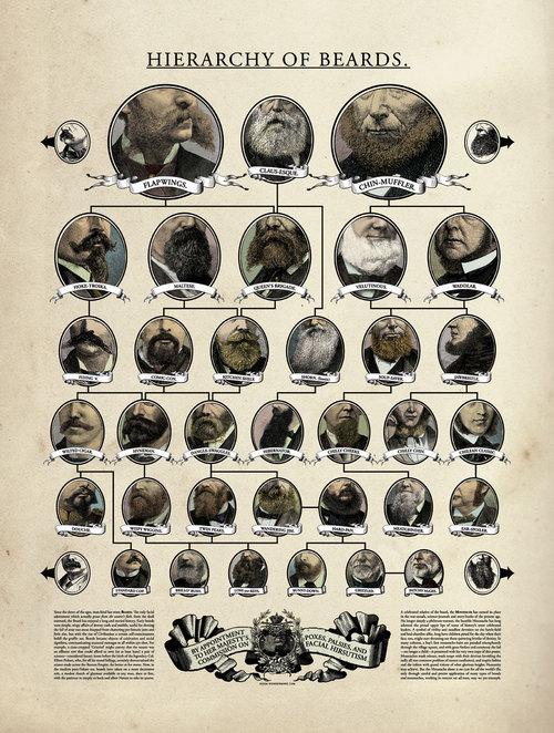 Иерархия бороды