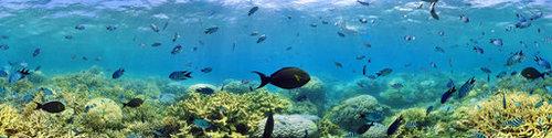 Панорама рифа Амеди