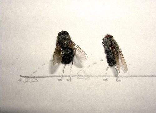 Секретная жизнь мух