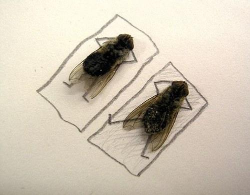 Искусство мух