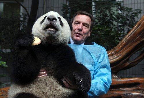 Панда и Шредер