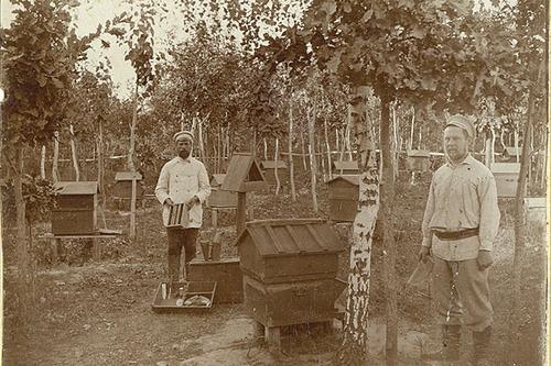 Пасека начала XX века