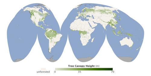 Карта высоты лесов