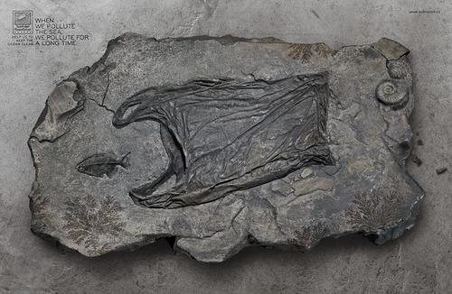 Surfrider Fossile