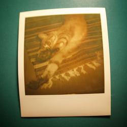 Polaroid вернулся
