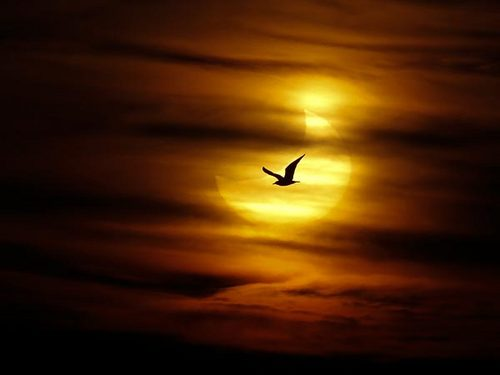 first-partial-solar-eclipse-2011-bird_30843_600x450.jpg