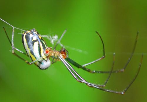 pz-spider.jpg