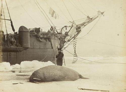 Арктические экспедиции прошлого