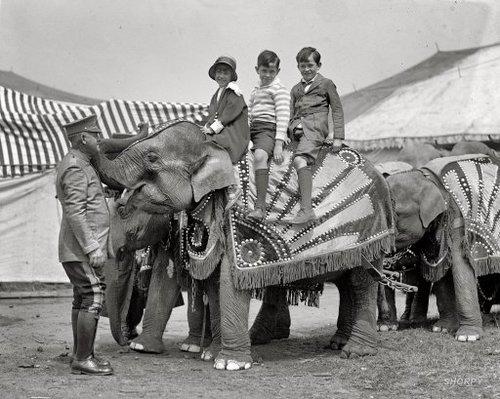 Слон на ярмарке