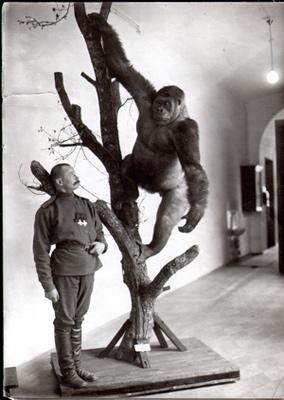 gorilla-docs.jpg