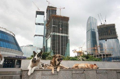 Московские собаки