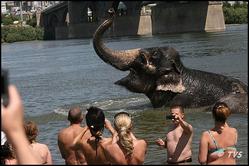 Слоны в Сибири