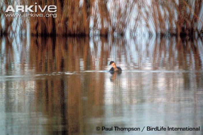 extinctbird