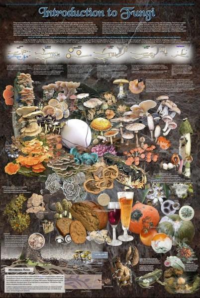 Введение в мир грибок