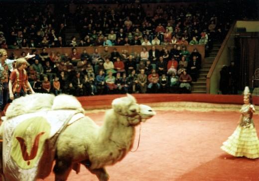 Новосибирский цирк