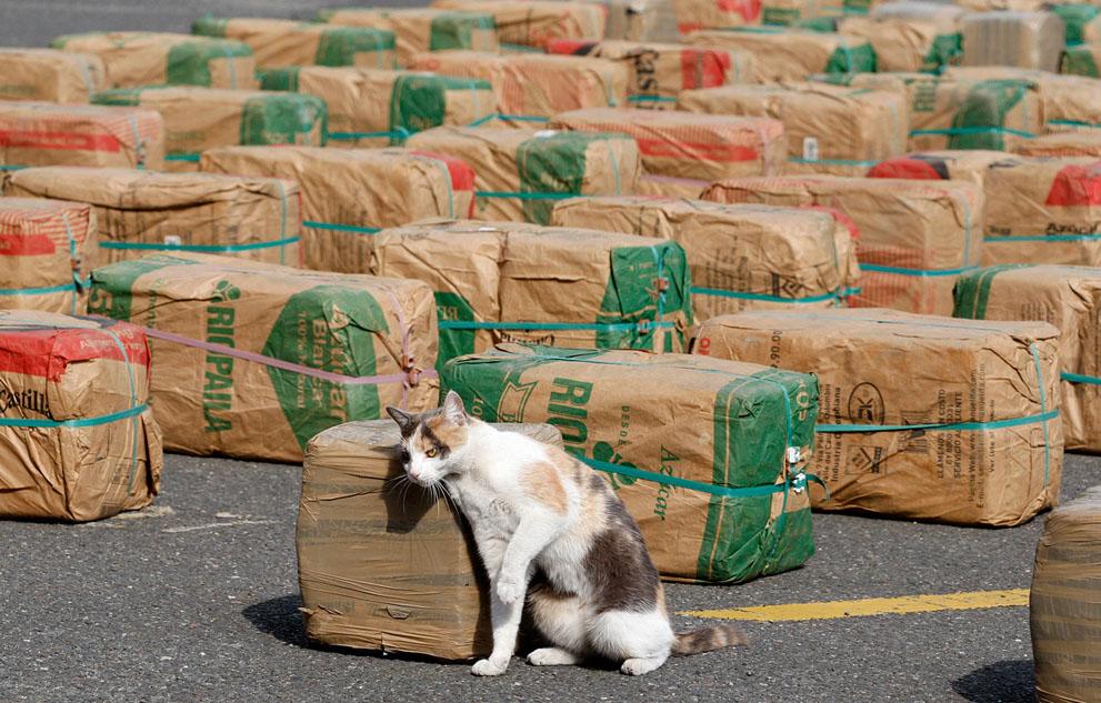 Котики и наркотики