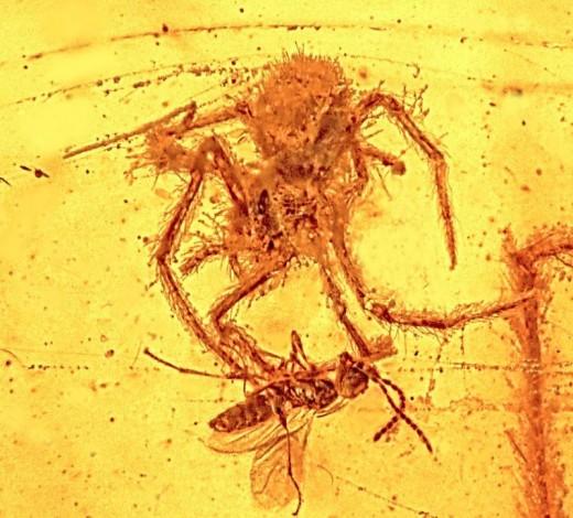 Битва паука и осы 110 миллионов лет назад