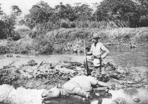 Смерть последнего носорога