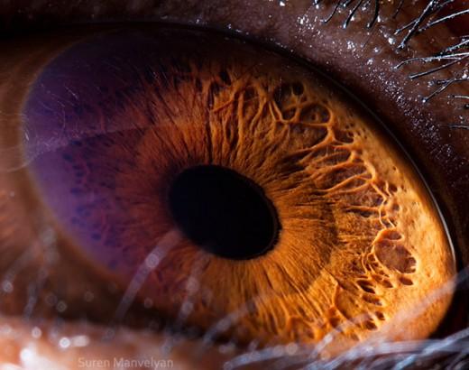 Animal-Eyes-Photo-Suren-Manvelyan-1